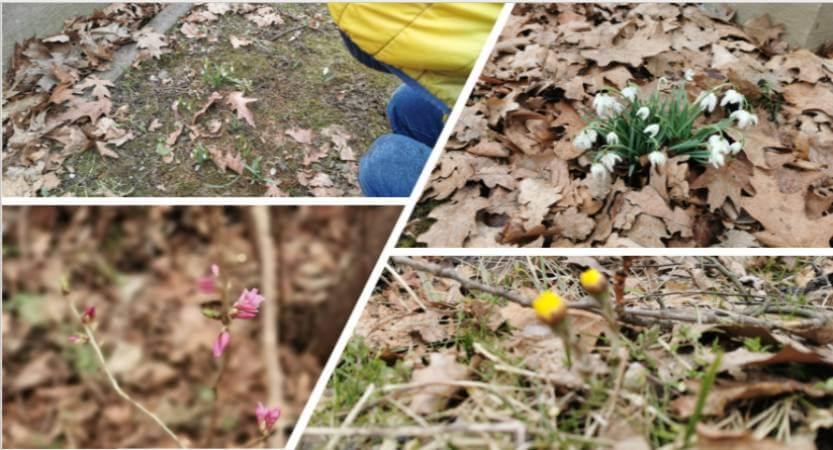 Wiosenni tropiciele z klasy I B