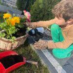 2c Sadzimy kwiaty na wiosnę