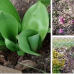 Wiosna u Oli w ogródku