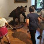 Spotkanie z dzikimi zwierzętami